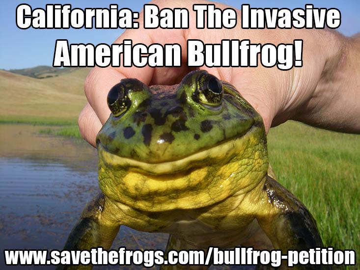Ban-The-Bullfrog-550
