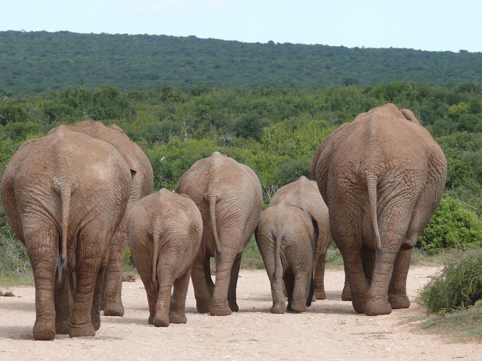 elephant-334456_960_720